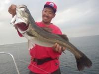 FISH8033e