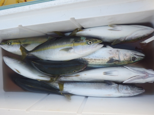 FISH6344s