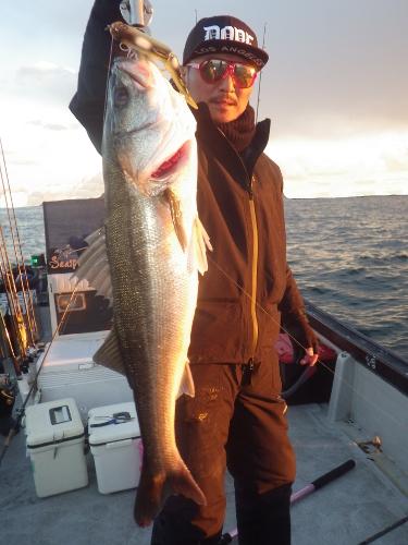 FISH6431s
