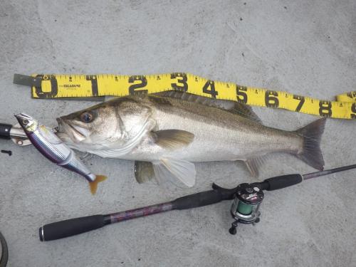 FISH6203s