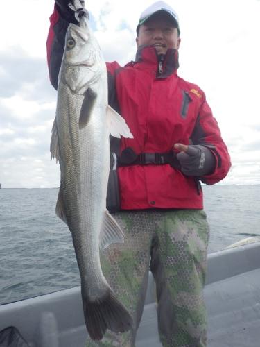 FISH6669s