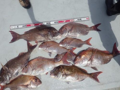 FISH6950