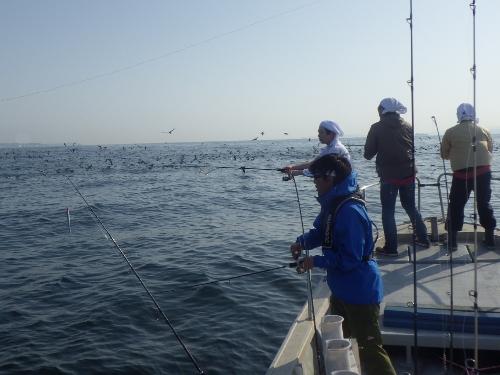 FISH7067c