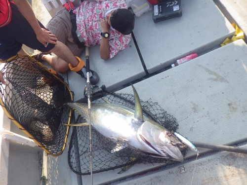 FISH7590