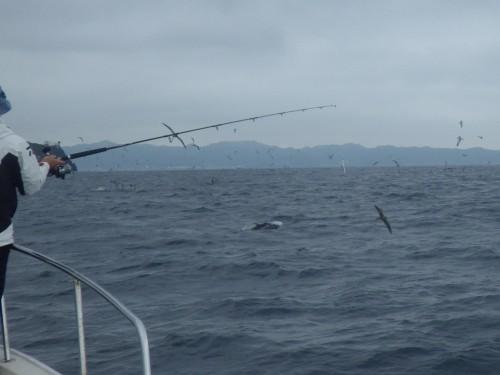 FISH7817c