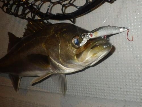 FISH7843c