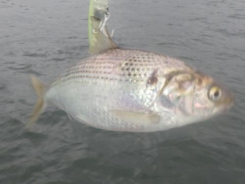 FISH7915c
