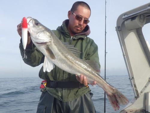 FISH8076e