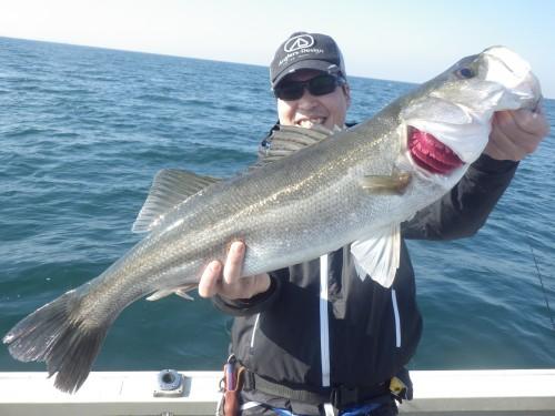 FISH8123e