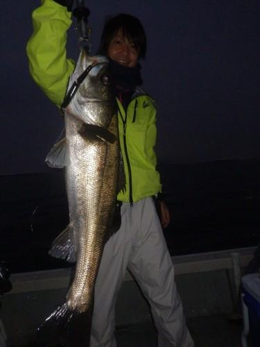 FISH8147e