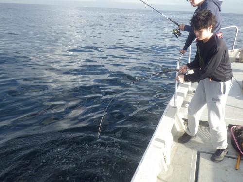 FISH8159