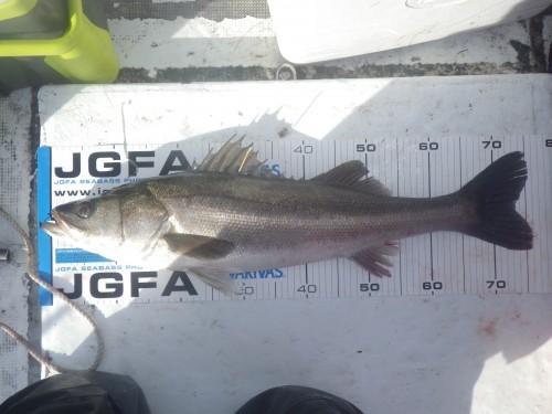 FISH8284