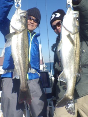 FISH8393s