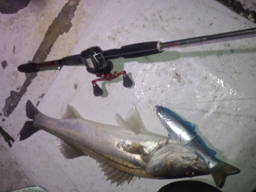 FISH8411