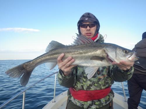 FISH8427