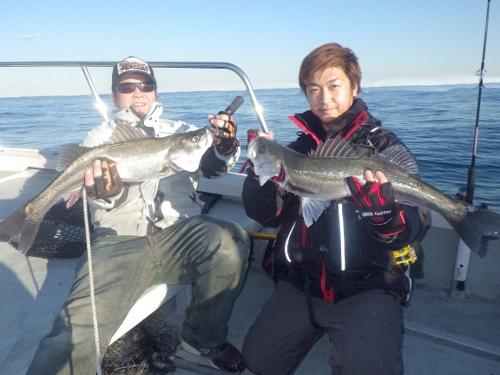 FISH8441s