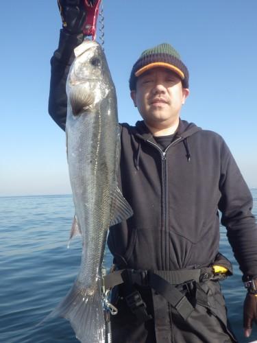 FISH8577