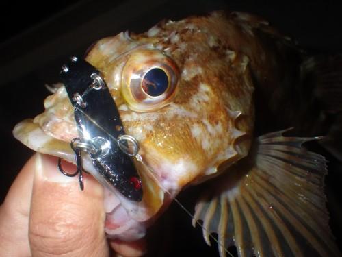 FISH8771
