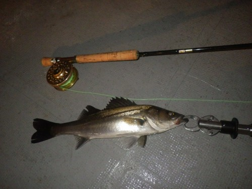 FISH8839