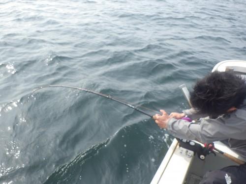 FISH9044