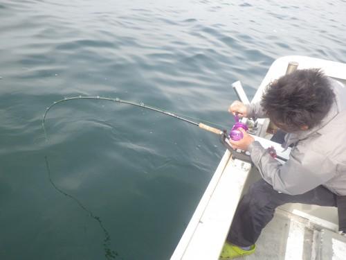 FISH9061