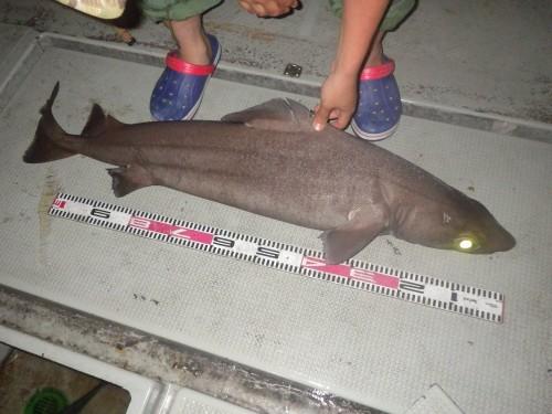 FISH9141