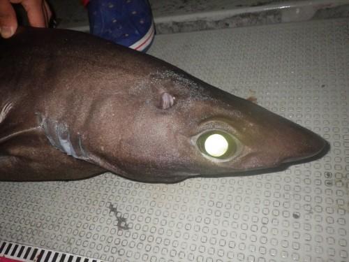 FISH9142