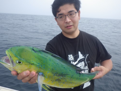 FISH9336