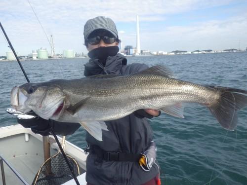 fish0353
