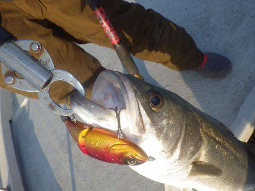fish0367