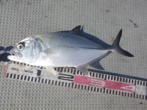 fish0581