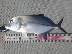 fish0583
